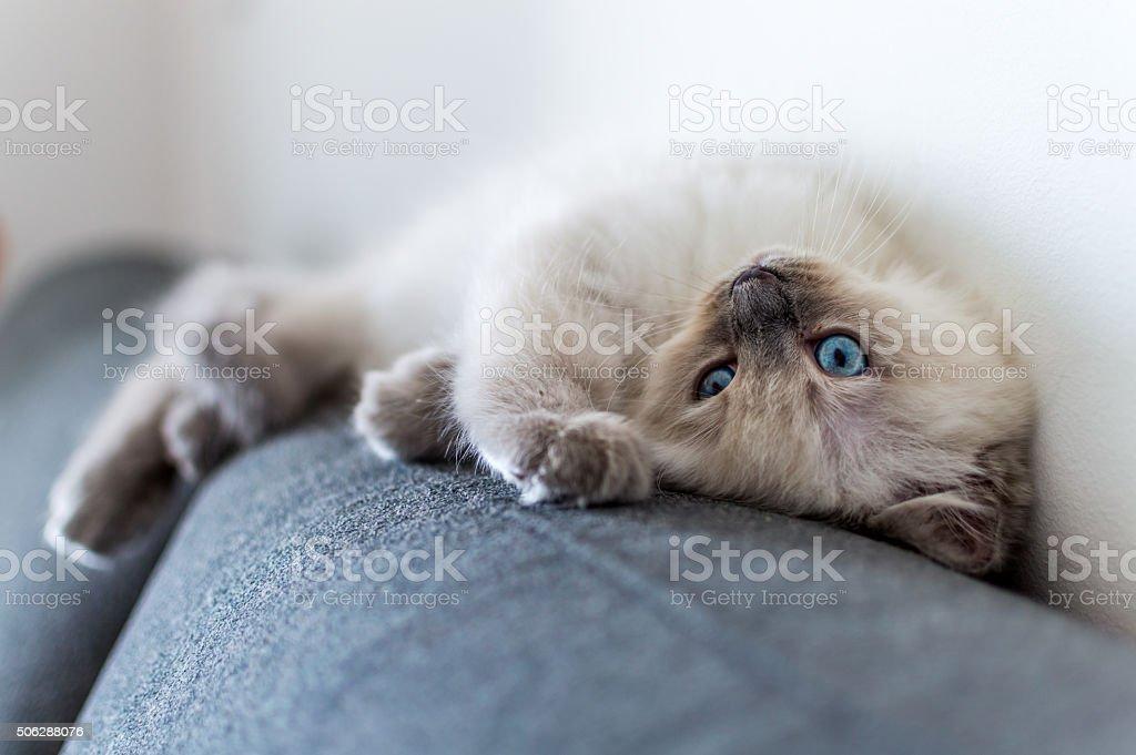 Tired Kitten stock photo