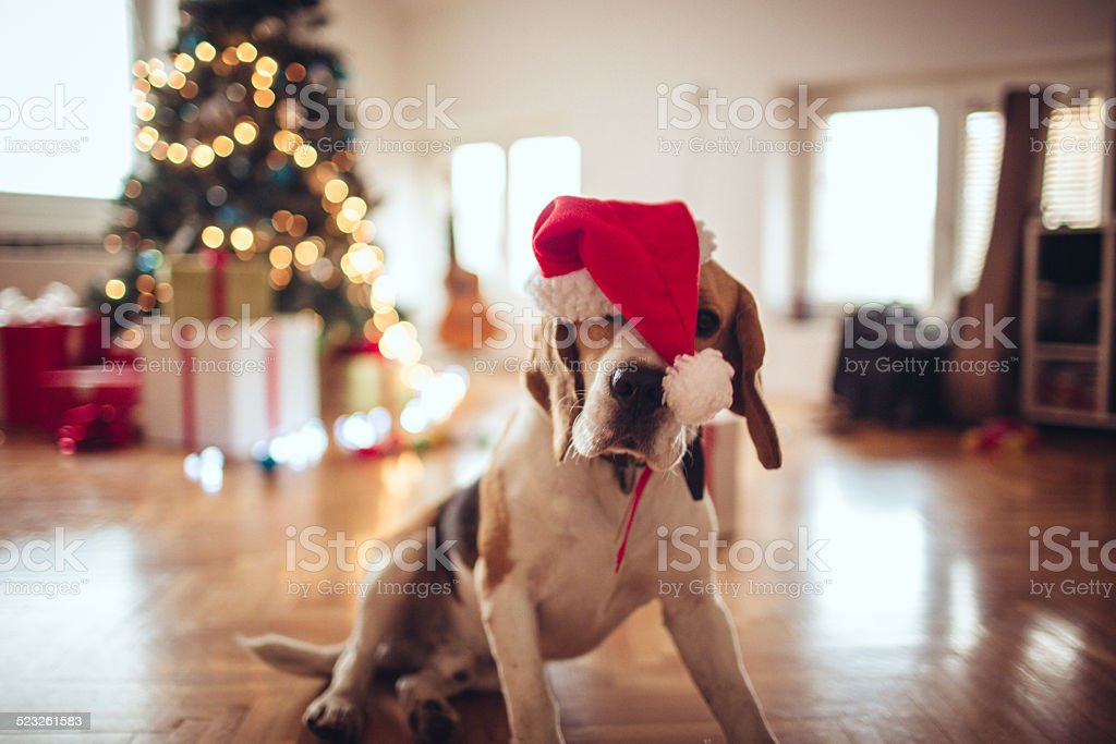 Tired of decorating for New Year's Eve stock photo