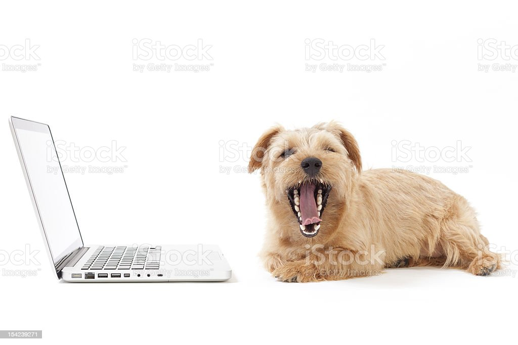 Tired office worker stock photo