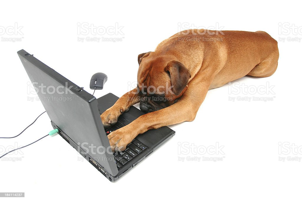 Tired office worker royalty-free stock photo