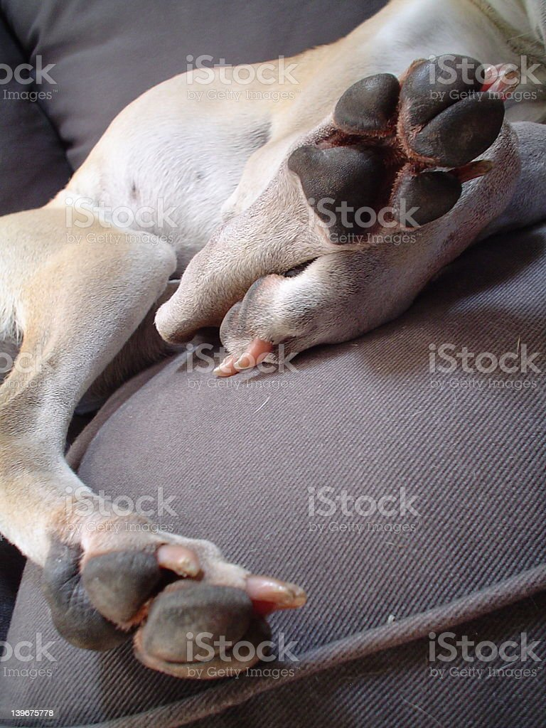 Tired Paws royalty-free stock photo