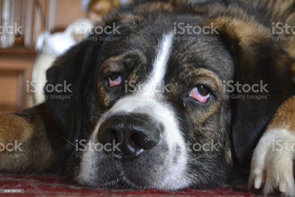 Tired ? stock photo