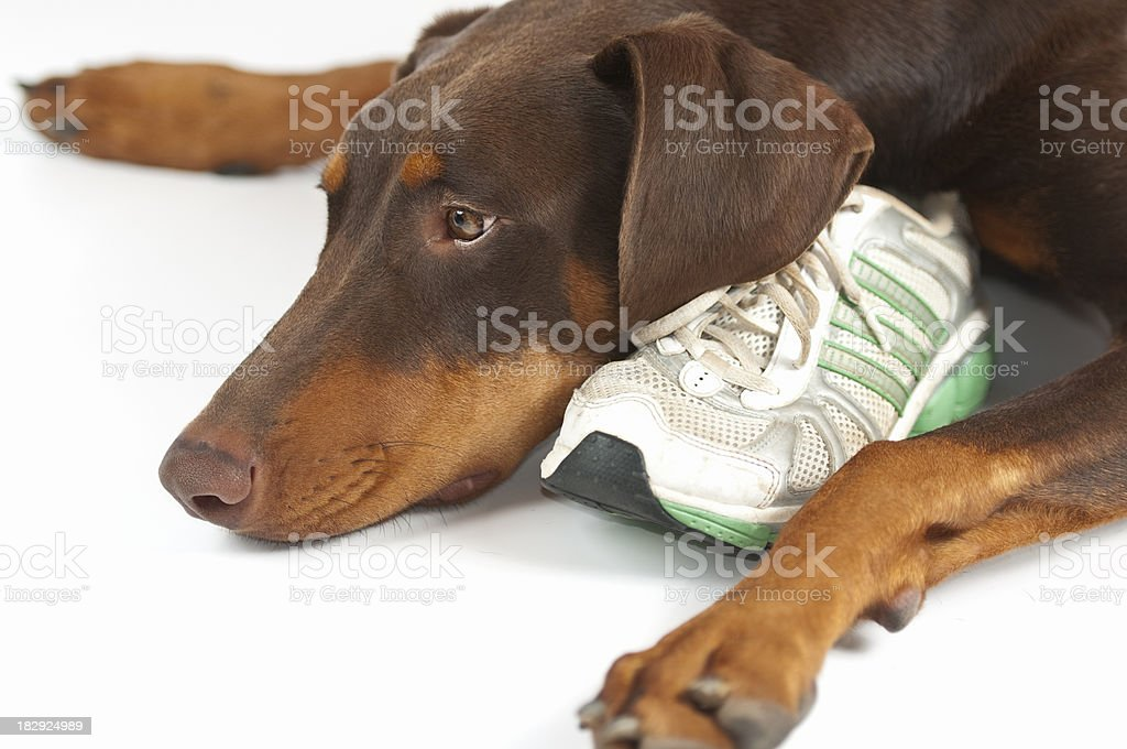 Tired Pup stock photo