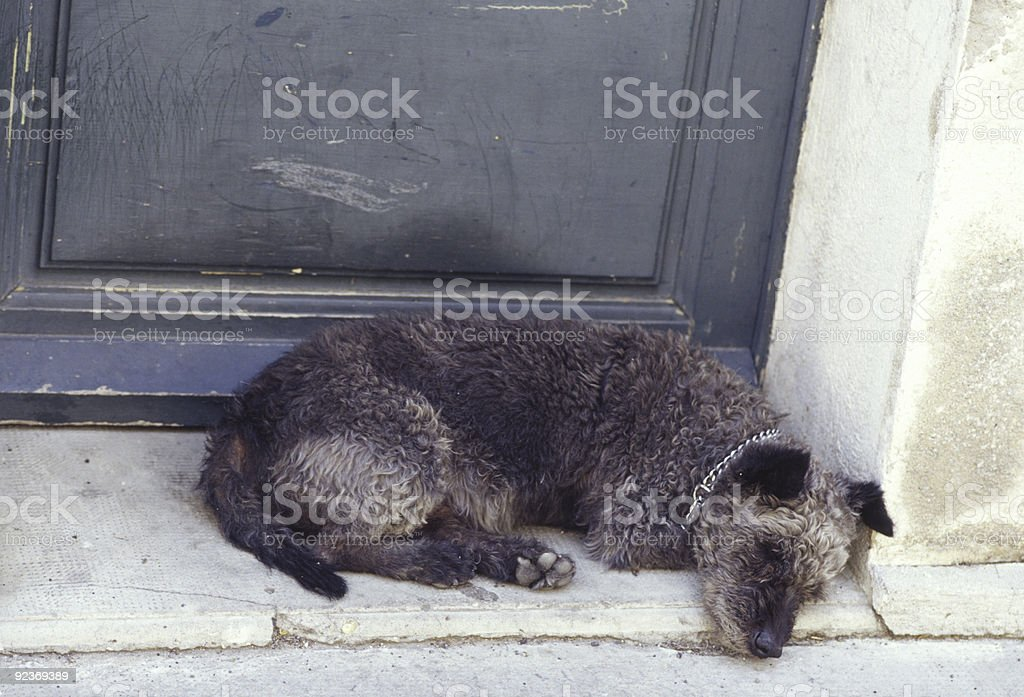 Tired, Sad Dog stock photo