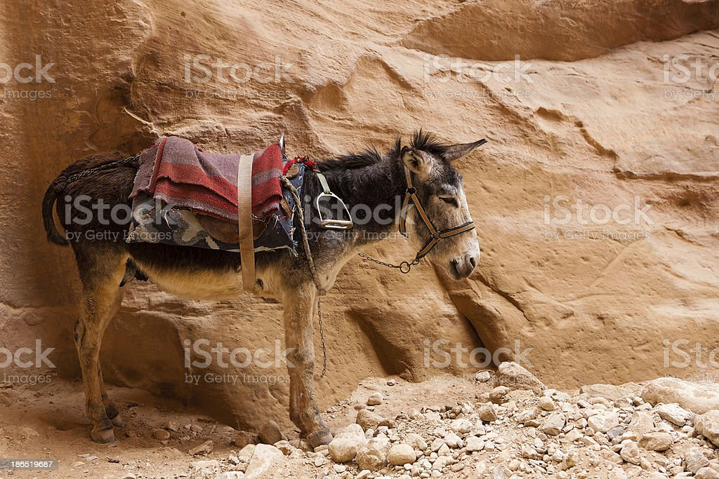 Tired sad donkey standing next to a stone wall royalty-free stock photo