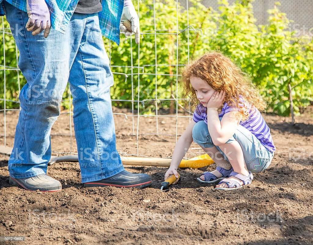 Tired Young Girl Helping Plant Potatoes in Garden stock photo