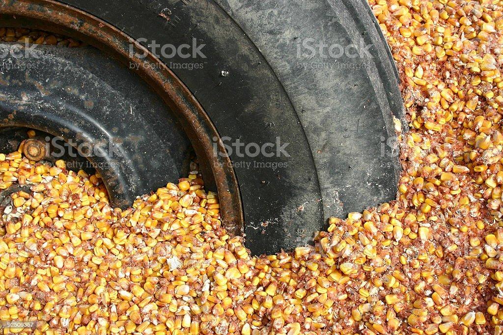 tired_corn_kernels stock photo