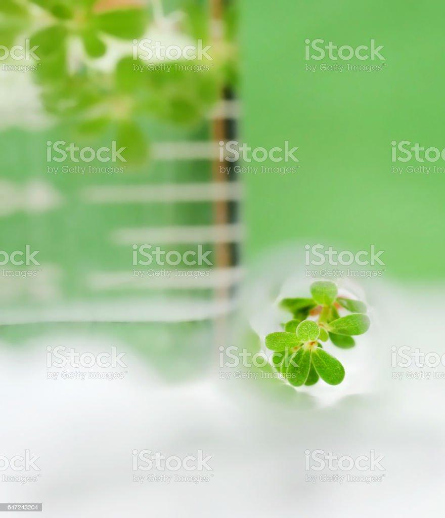 Tissue culture concept stock photo