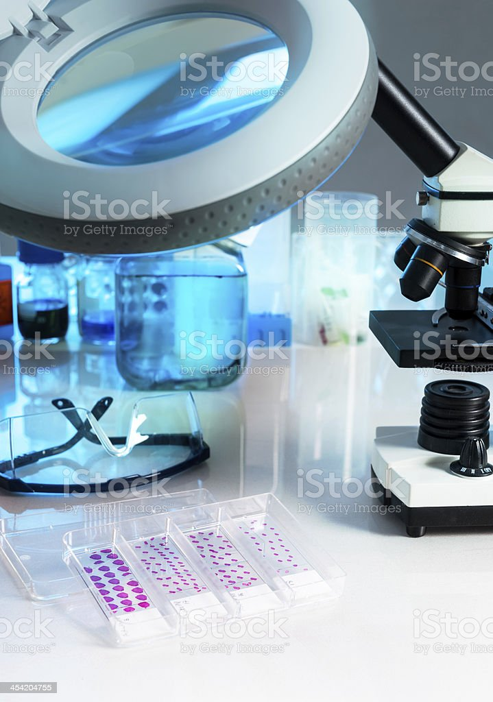 Tissue samples for microscopy royalty-free stock photo
