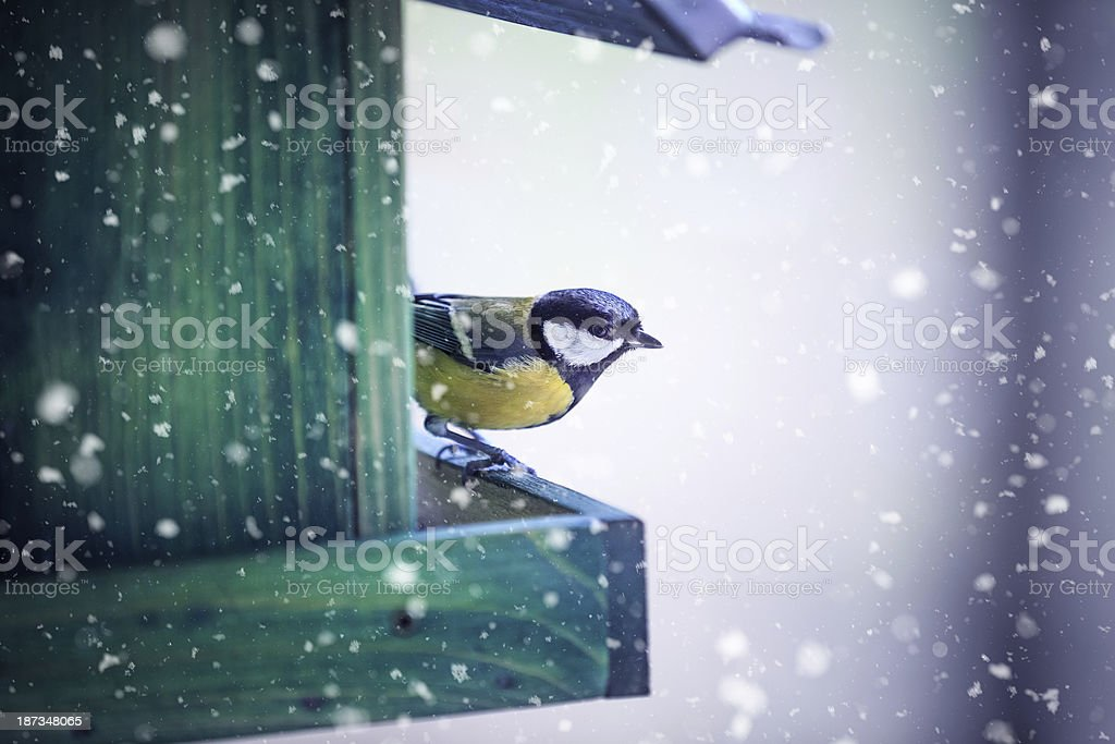 Tit In A Bird House royalty-free stock photo