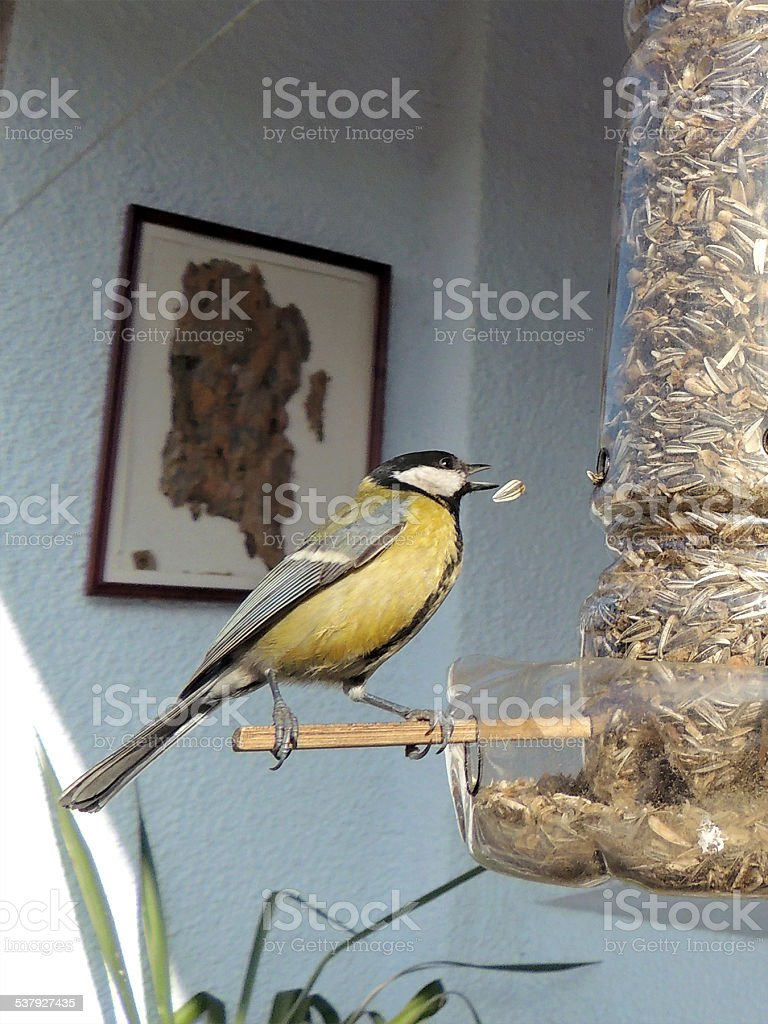 Tit On A Homemade Feeder stock photo