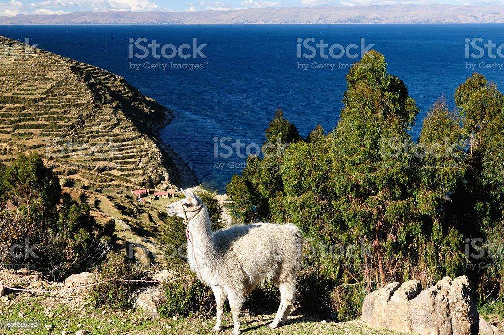 Titicaca lake, Bolivia, Isla del Sol landscape stock photo
