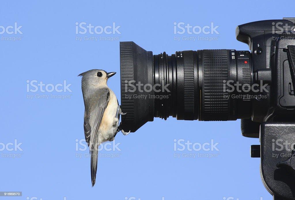 A titmouse bird on a camera lens stock photo