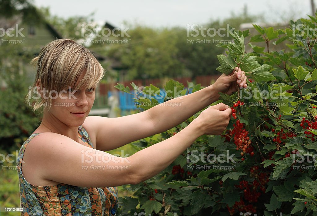 to harvest royalty-free stock photo