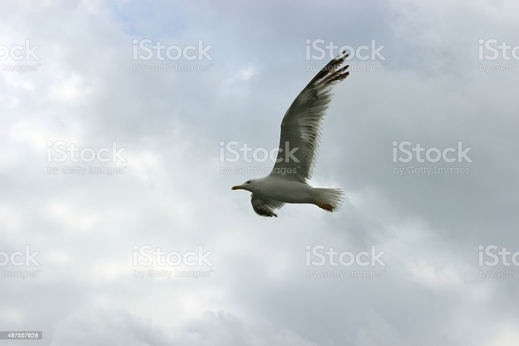 To soar above open space stock photo