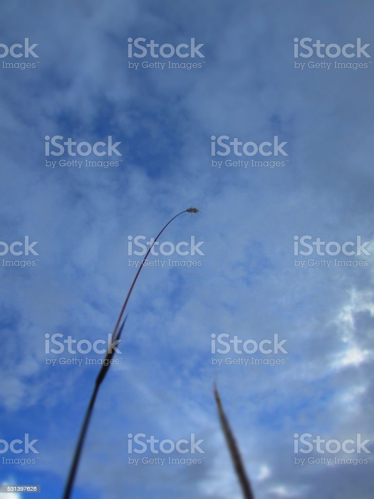 To the sky royalty-free stock photo