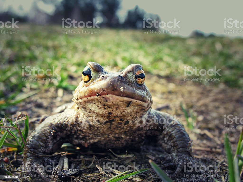 Toad close-up stock photo