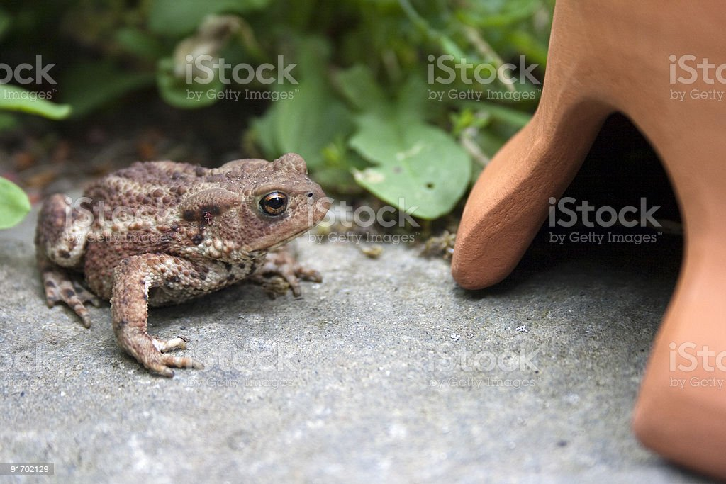 Toad Hall stock photo