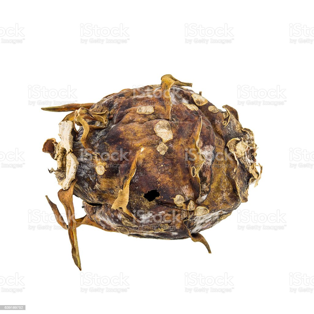 Toad isolated on white background stock photo