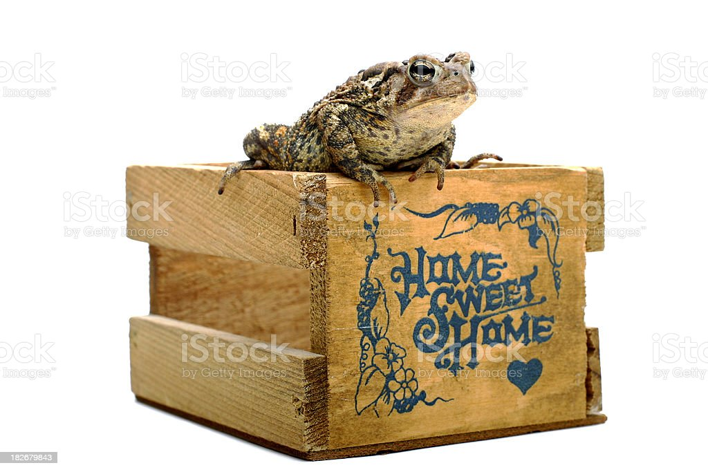 Toad on a Crate royalty-free stock photo