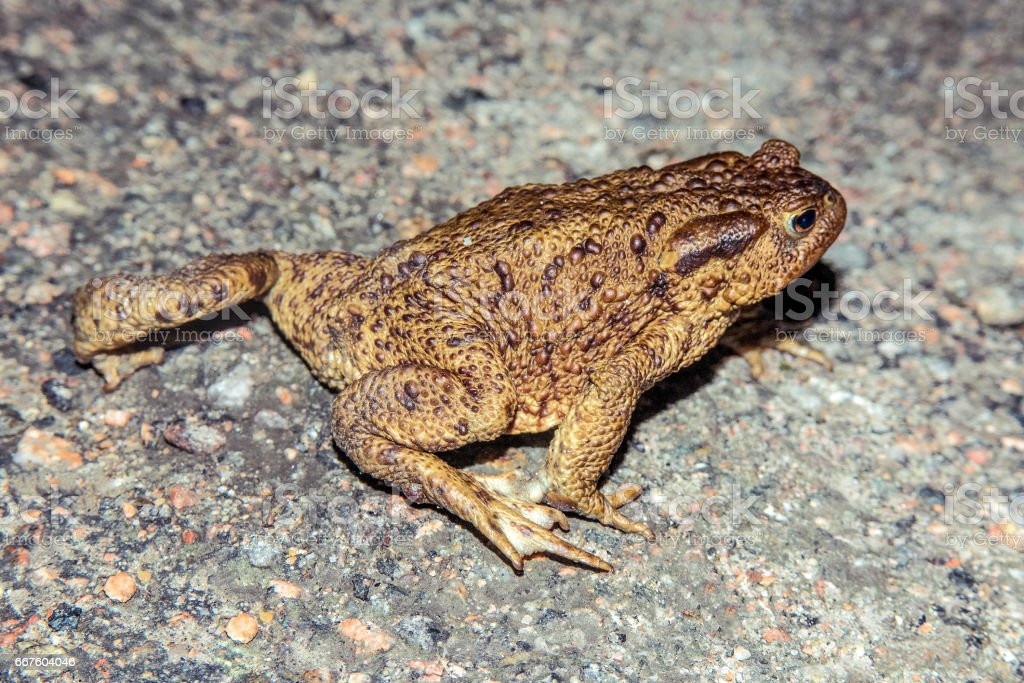 Toad walk stock photo