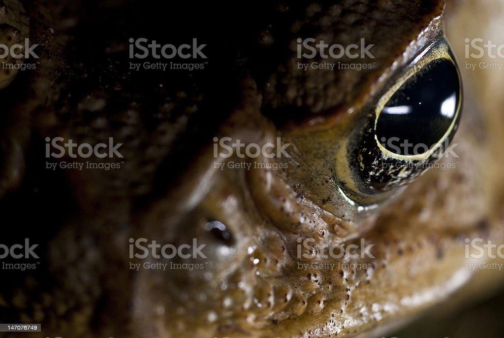Toads eye closeup stock photo