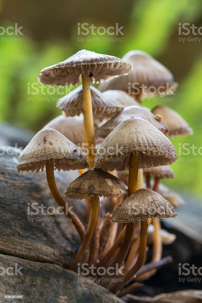 Toadstools on log stock photo