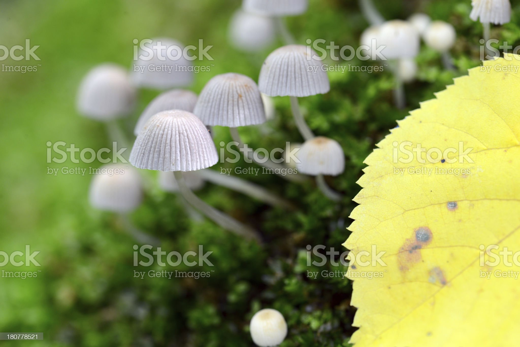 Toadstools royalty-free stock photo