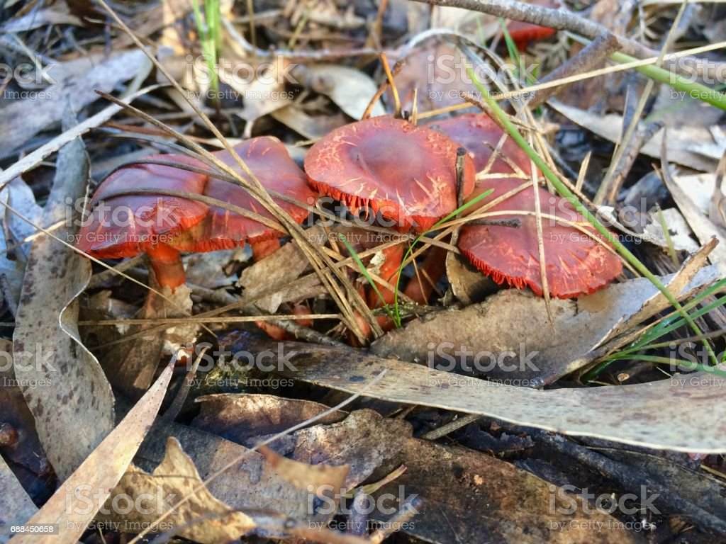 Toadstools stock photo