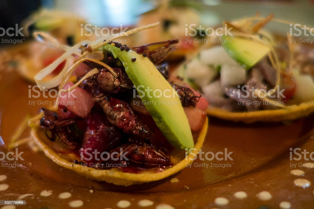 Chapulines Tostada stock photo