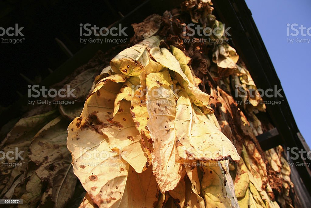 Tobacco Barn, Looking Up 02 stock photo