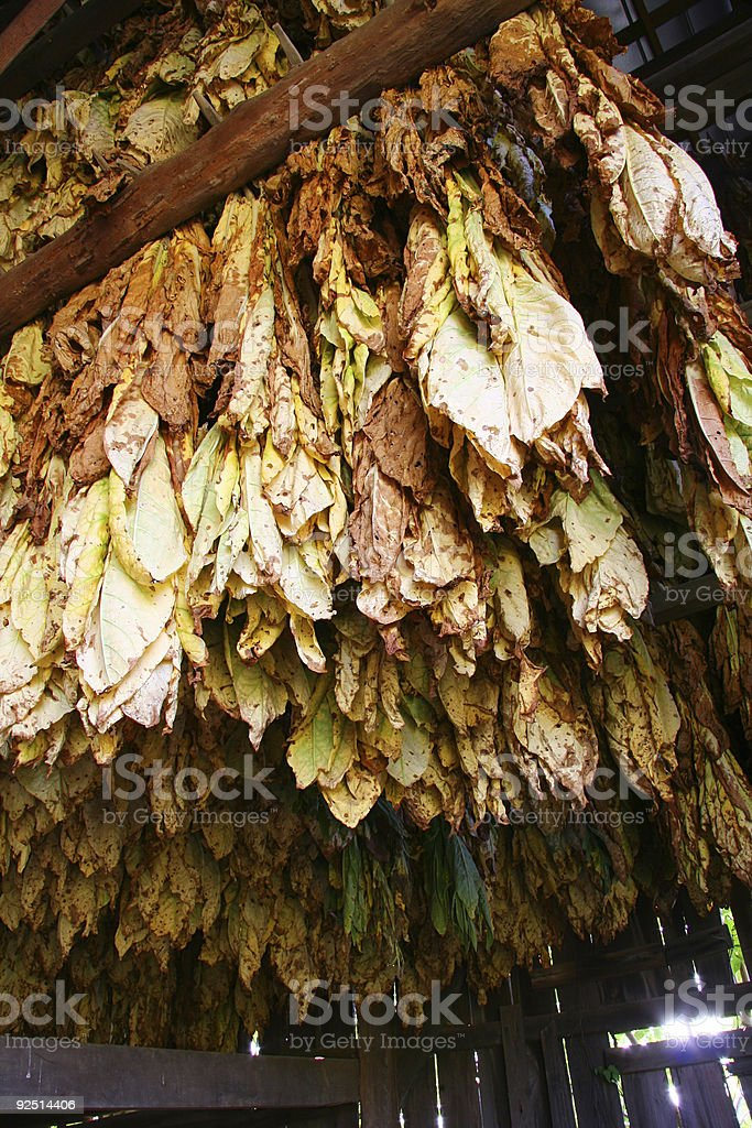 Tobacco Barn, Looking Up 04 stock photo