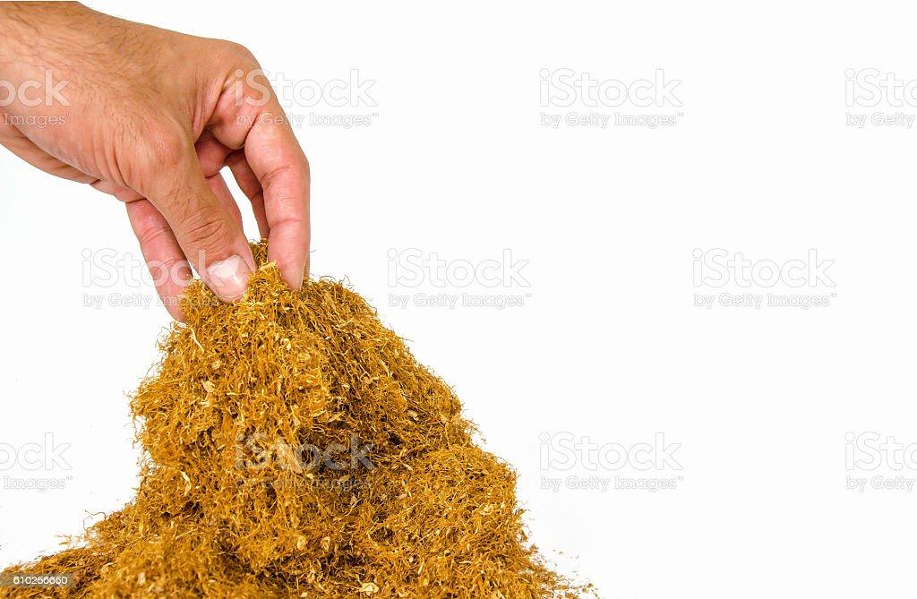 tobacco isolated on white background stock photo