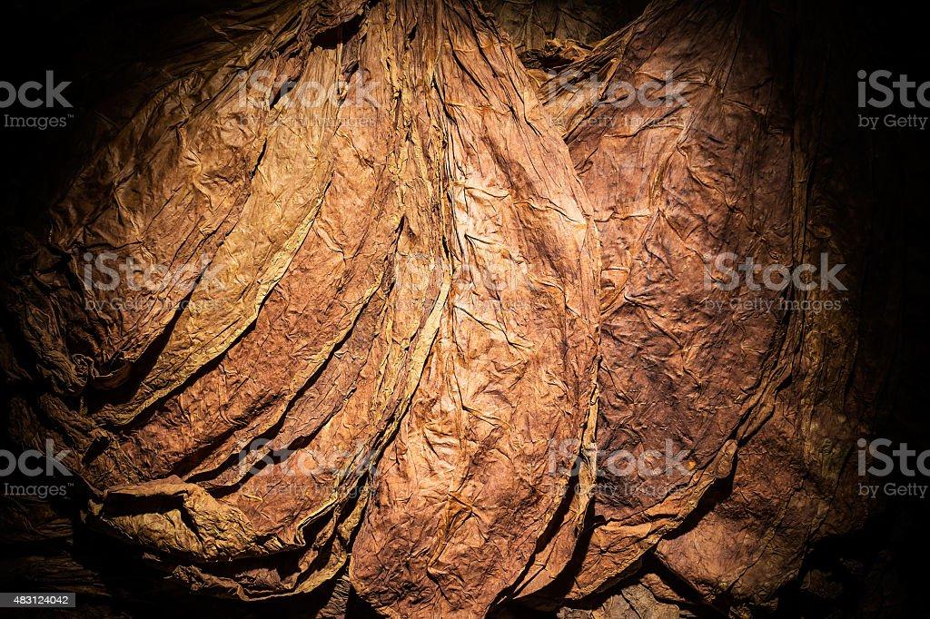 Tobacco Light stock photo