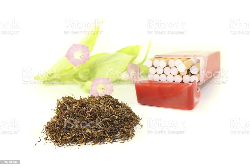 Tobacco with cigarettes case and plant royalty-free stock photo