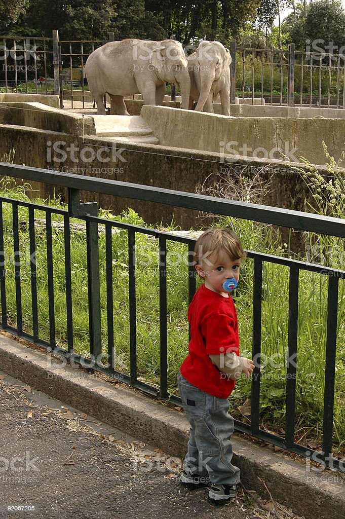 Toddler and the Elephants royalty-free stock photo
