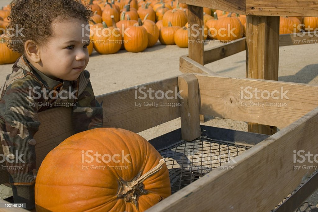 Toddler Boy at the Pumpkin Patch stock photo
