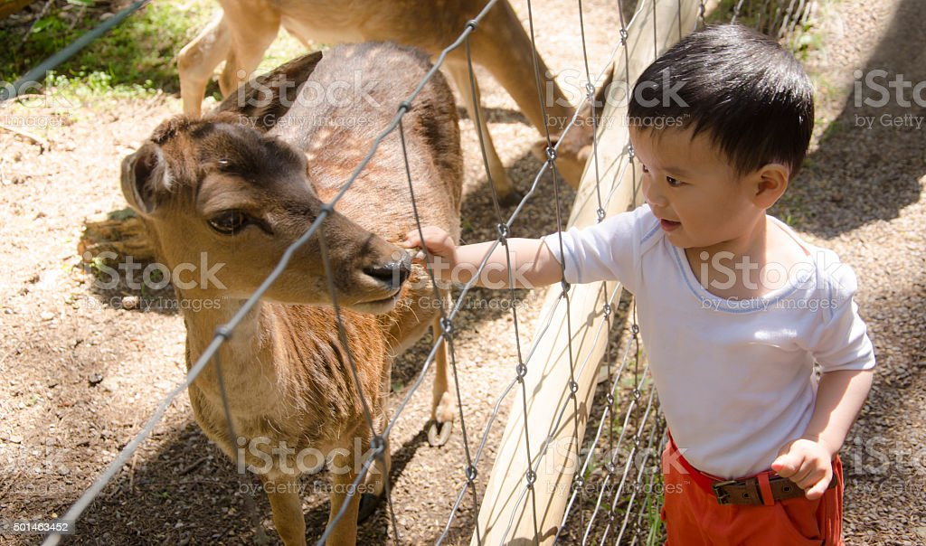 Toddler boy feeding spotted deer stock photo