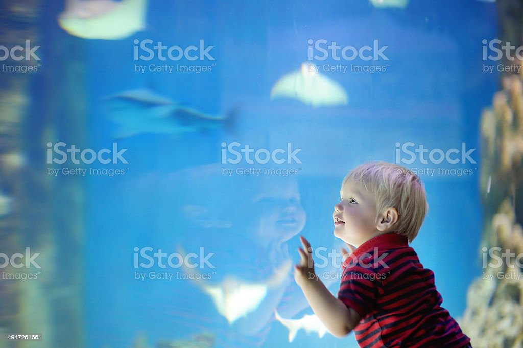 Toddler boy watches fishes stock photo
