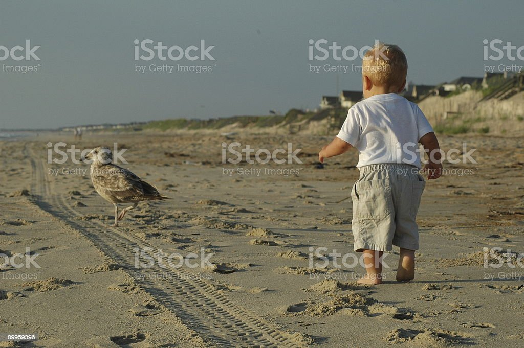 Toddler chasing seagull royalty-free stock photo