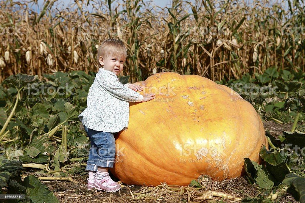 Toddler Girl Outdoors by Gigantic Pumpkin royalty-free stock photo