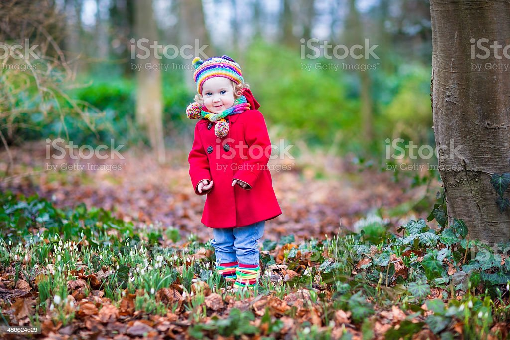 Toddler girl playing with first snowdrop flowers in spring park stock photo
