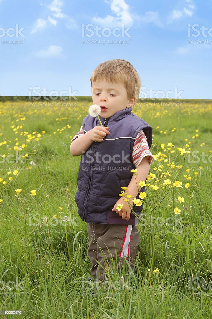 Toddler holding a Dandelion royalty-free stock photo