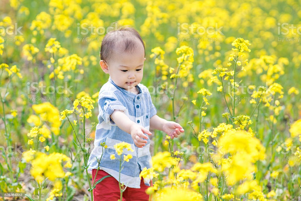 Toddler in a field of flowers stock photo