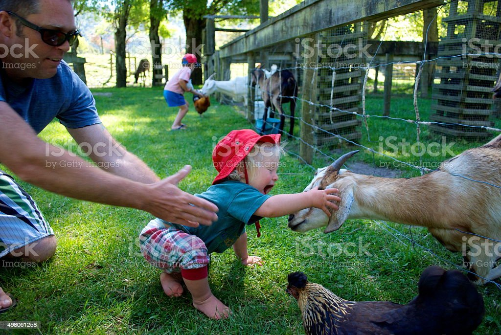 Toddler Pets Goat stock photo