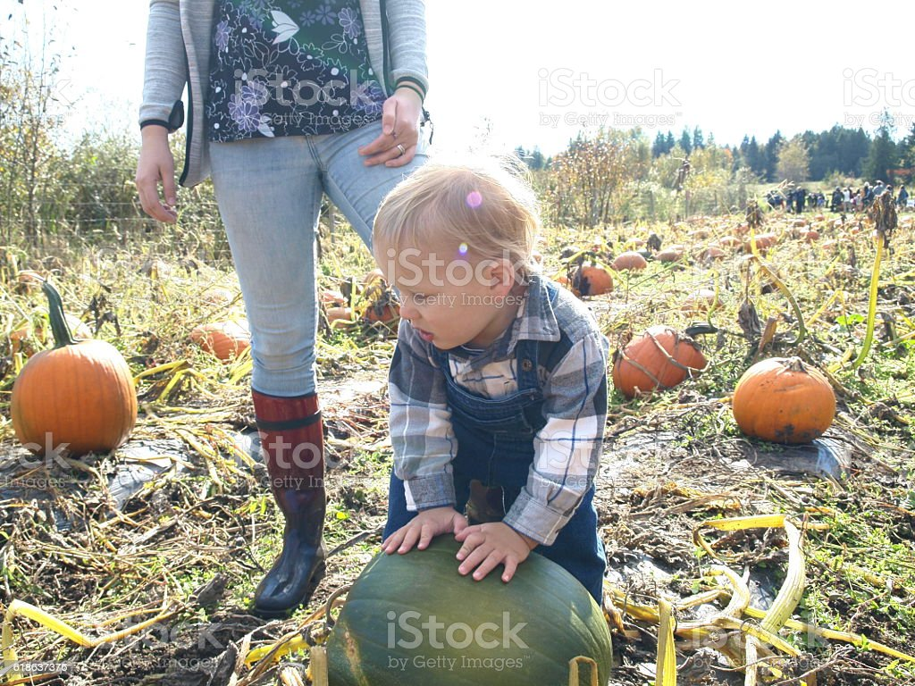 Toddler picking only green pumpkin in the patch with mother stock photo