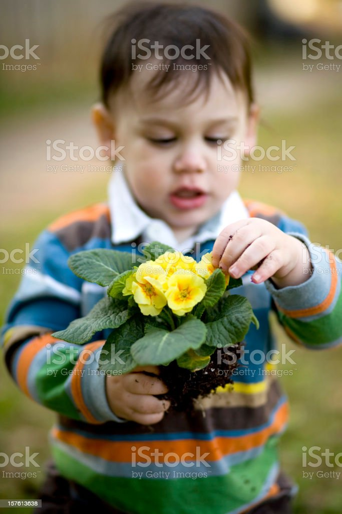 Toddler playing she loves me not. stock photo
