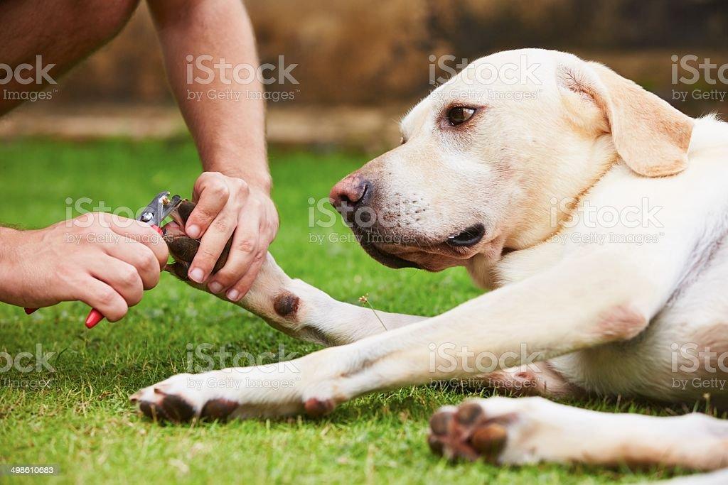 Toenails of the dog stock photo