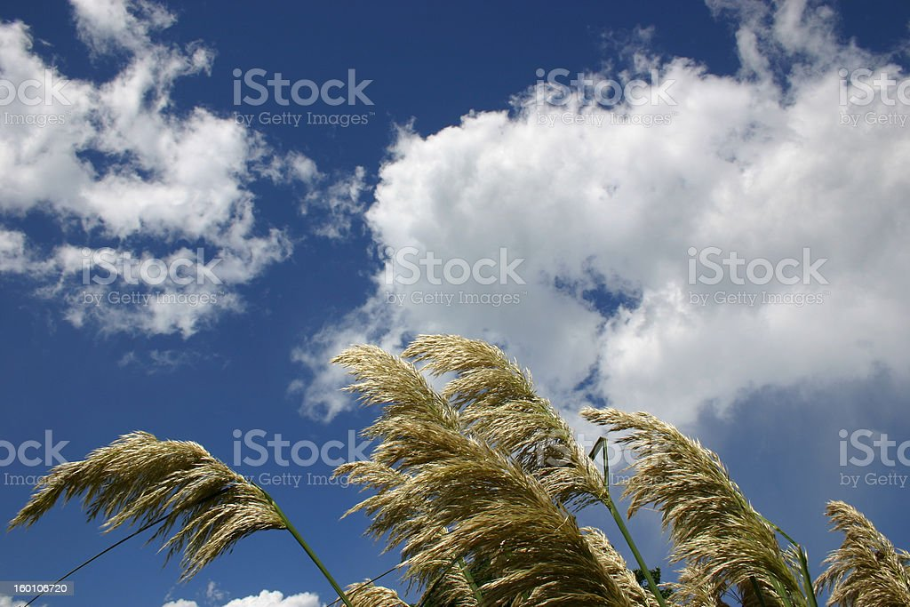 ToeToes Blowing in wind stock photo