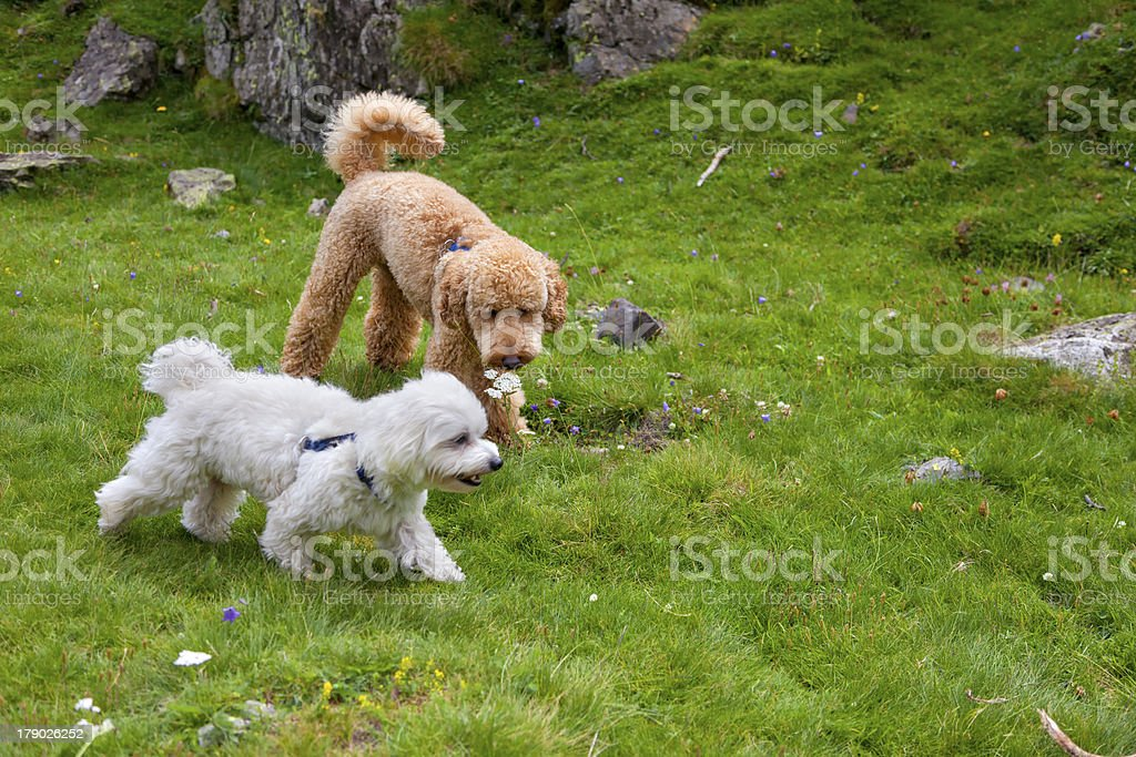 Together royalty-free stock photo
